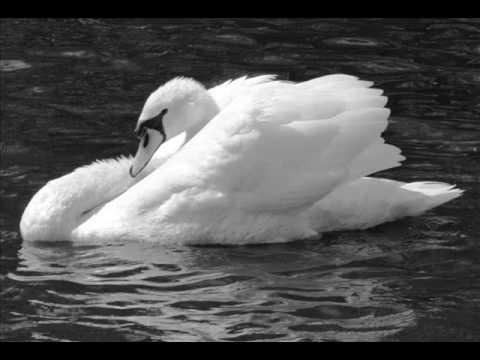 Чайковски Лебедово езеро