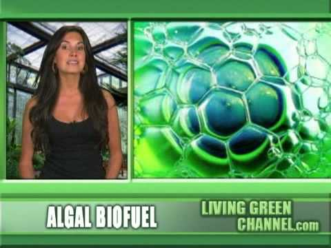 bull shit - Biofuel from Algae instead of meals