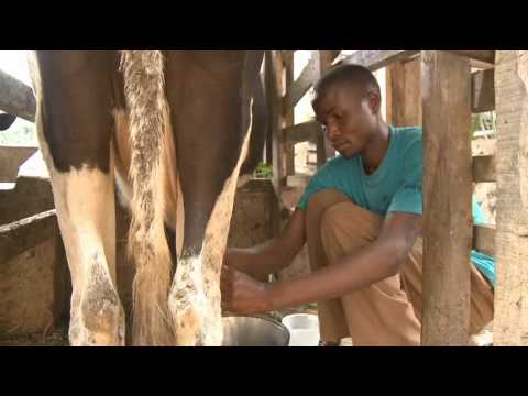 Sky Link Innovators, making biogas from waste in Kenya - Ashden Award winner