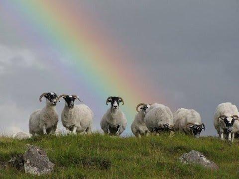 Sonnet of Rainbows ( Original )