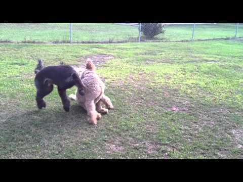 Honey and Rosco Play Date