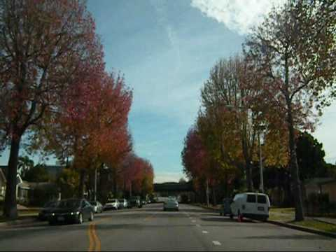 Wicked Fall Foliage on Westwood Blvd