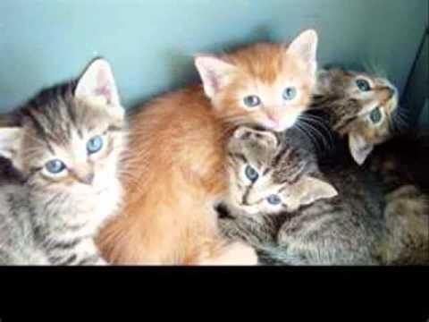 Mark Kerr - Animal Welfare Please Help