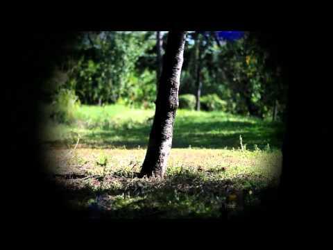 R.e.a.l Wolfish - Oak Tree