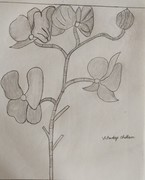 penile sketch  with flower