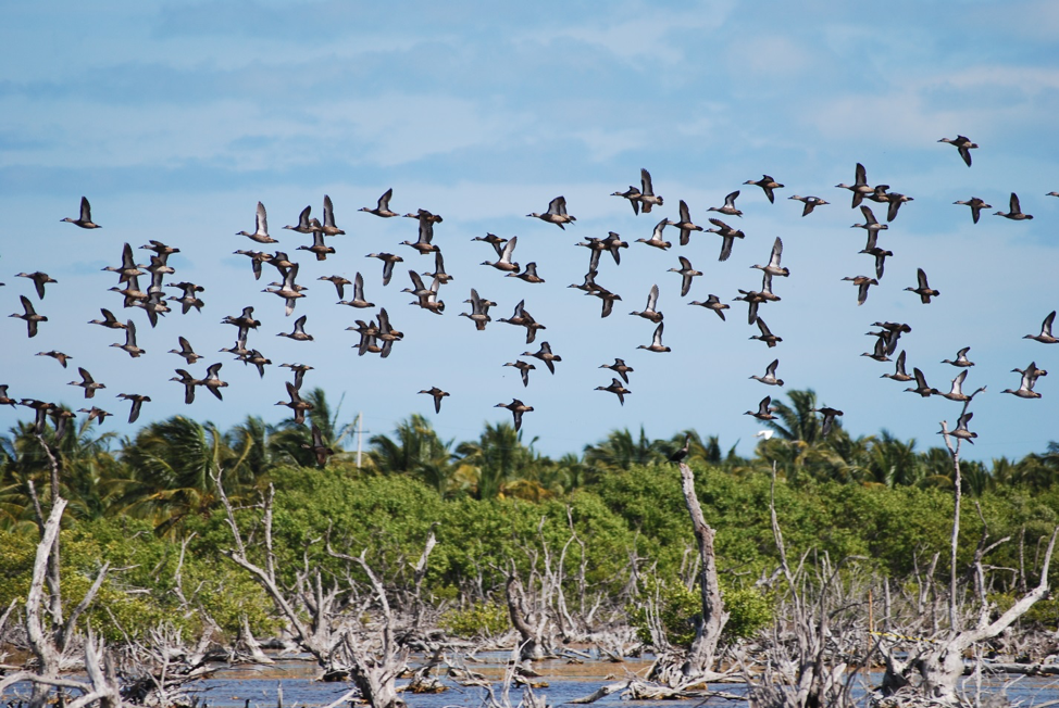 Nature4Climate: Celebrating mangroves and local community leaders on World Forest Day