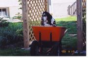 Sophie the Gardener