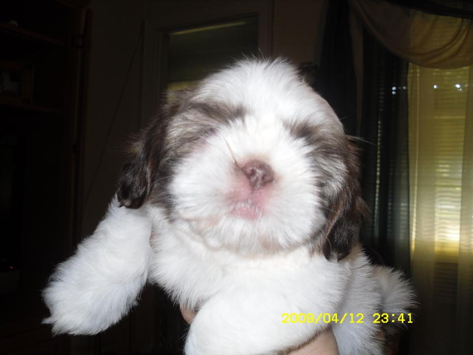 Buster Brown, 8 weeks