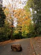 8. Autumn