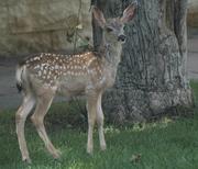 Bambi came to visit!