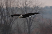Beauty in flight!