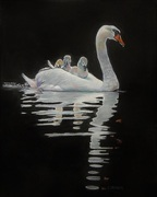 The Pen and the Cygnets