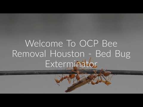 OCP Bee Removal in Houston, TX (346-201-4360)