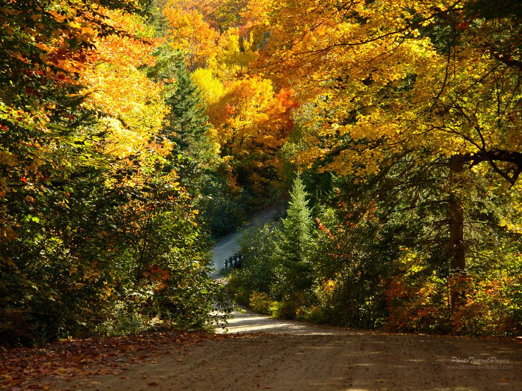 შემოდგომა, ქველი, ფოთლები, ფერები, ყვითელი, წითელი, მწვანე, Qwelly, autumn, leaves, fotlebi, red, blue, yellow, green, mwvane, witeli, yviteli, shemodgoma