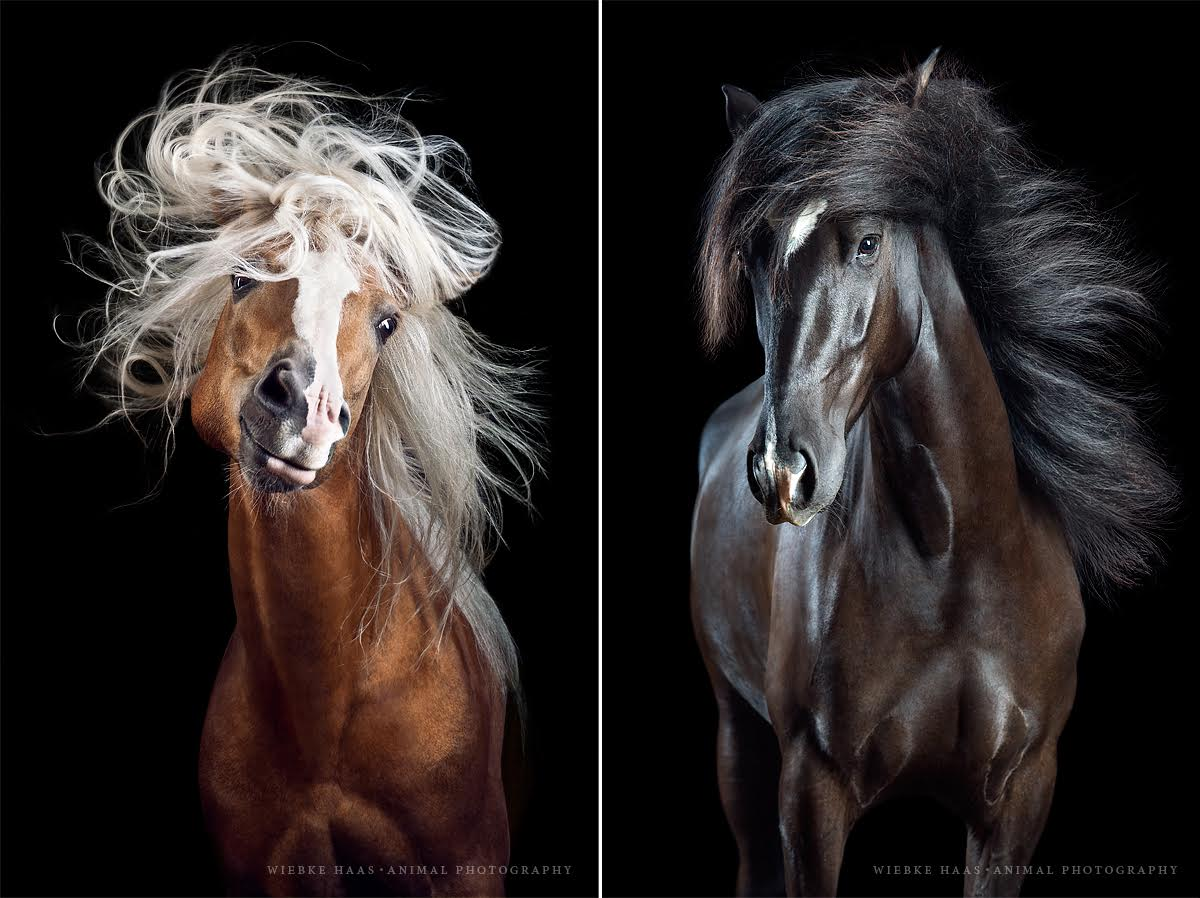 ცხენები, ცხენი, ვარცხნილობა, მაკიაჟი, ქველი, ბლოგი, Qwelly, Carefree, Horses, Fly, Glamorous, Beauty, Portraits