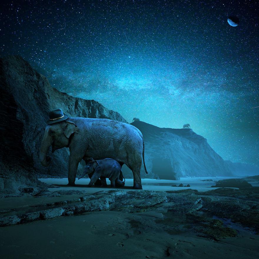 animal, aquarium, cloud, cold, elephant, eternity, frog, grasshopper, guardians, key, land, moon, nature, night, palace, people, planet, qwelly, surfer, surreal, teacher, world, zoo, ადამიანი, აკვარიუმი, ბაყაყო, ბუნება, გასაღები, ეს საინტერესოა, ვარდიელები, ზოოპარკი, კალია, მარადისობა, მასწავლებელი, მთვარე, პლანეტა, სასახლე, სერფინგისტი, სიურეალისტური სამყარო ცხოველებისთვის, სპილო, ღამე, ღრუბელი, ცივი, ხმელეთი