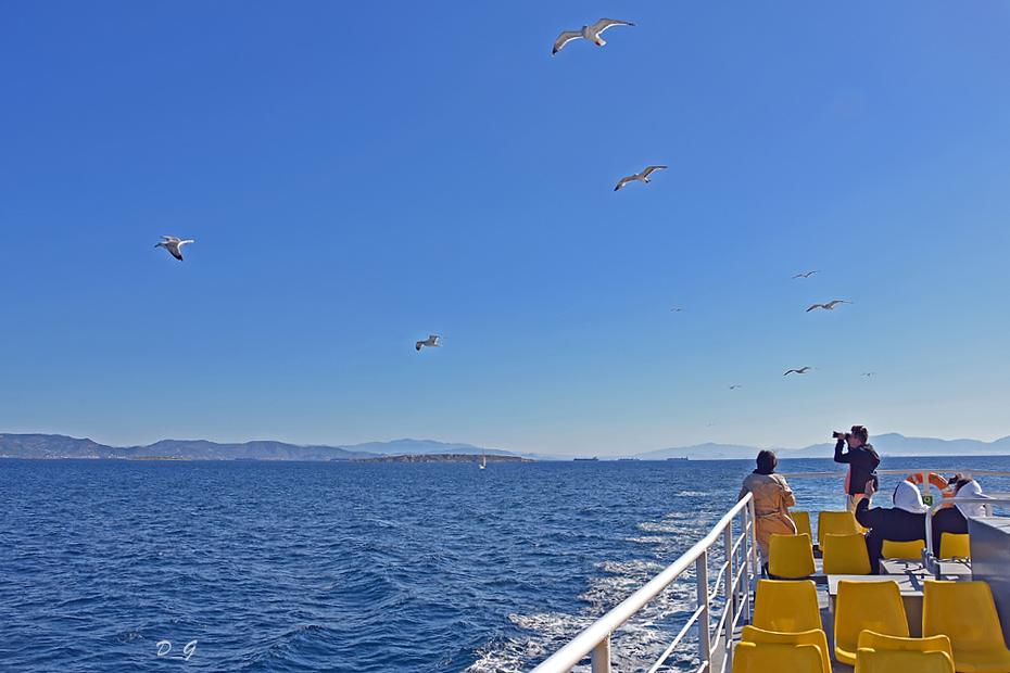 Φωτογραφίζοντας γλάρους στο πλοίο!