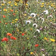 """Enrollment for """"Wild Plants in their Places: An introduction to Botany"""""""