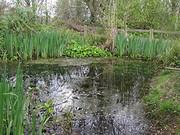 Pond Planting & Nature Walk at Railway Fields