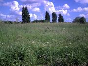 Ecological stroll around Tottenham Marshes