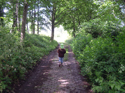 Railway Fields Local Nature Reserve: Walk and talk