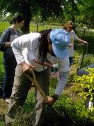 The Finsbury Park Community Garden Project