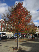 Haringey Tree Wardens - Tree Walk - Scotch Estate, Woodside, Lordship Lane