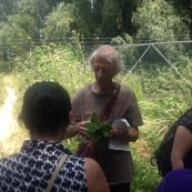FREE PACT Foraging Walk: spring greens, with Andy Pattenden