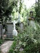 Natural History in the Cemetery