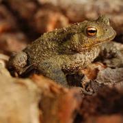 Biodiversity Talk at Woodberry Wetland: Wetlands