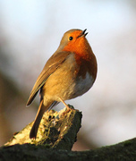 Bird Song Talk and Walk