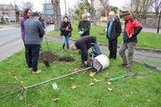 Tree Planting in Bruce Castle Park