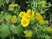Wildflower Saturday