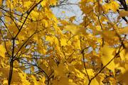 Tree Walk in Alexandra Park