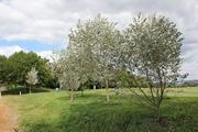 Spring Tree Walk
