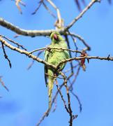 Bird Walk in Alexandra Park