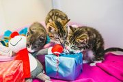 The Mayhew Animal Home Christmas Fair