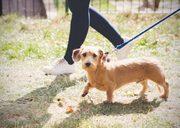 Fun Dog Walk for Mayhew on Hampstead Heath