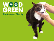 Cat MOT £5 and FREE Microchip