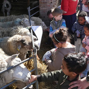 Lambing Weekend Forty Hall