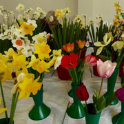Muswell Hill Spring Flower Show