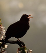 Dawn Chorus Walk at Railway Fields