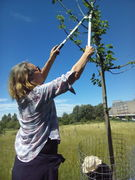 Fruit tree pruning and care workshop