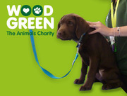 Dog MOT £5 and FREE Microchip