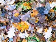 Railway Fields Summer Holiday Activities: Leaf Bashing