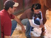 Equine Massage for Performance Horses Certification