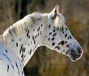 Winter Equine Photography - Sat. Feb 6, 2016 - Travis Hall Equestrian Centre, Fergus