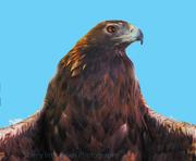 """""""Eagle Pride"""""""