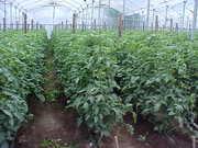 II Congreso de Agricultura Protegida