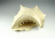 Conch Fossil